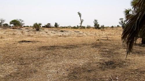 Visite du site maraîcher de Karguibangou (Dosso).