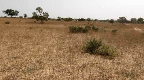 Vue d'un des sites à récupérer du village de Batafadoua 1 (Commune rurale de Chadakori) , envahi par le Sida Cordifolia.