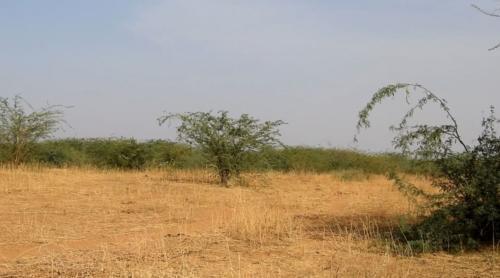 Vue d'un des sites a récupéré. Ce dernier est envahi par le sida cordifolia et les prosopis.