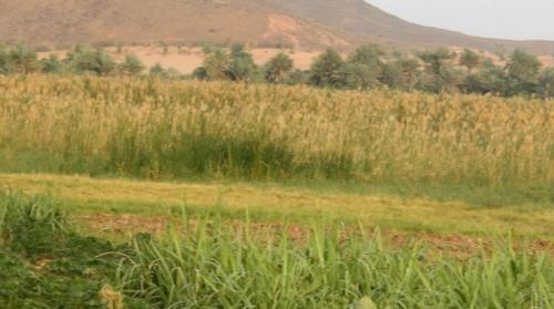 Visite d'une mare au niveau du village de Dossey, Commune rurale de Konni.